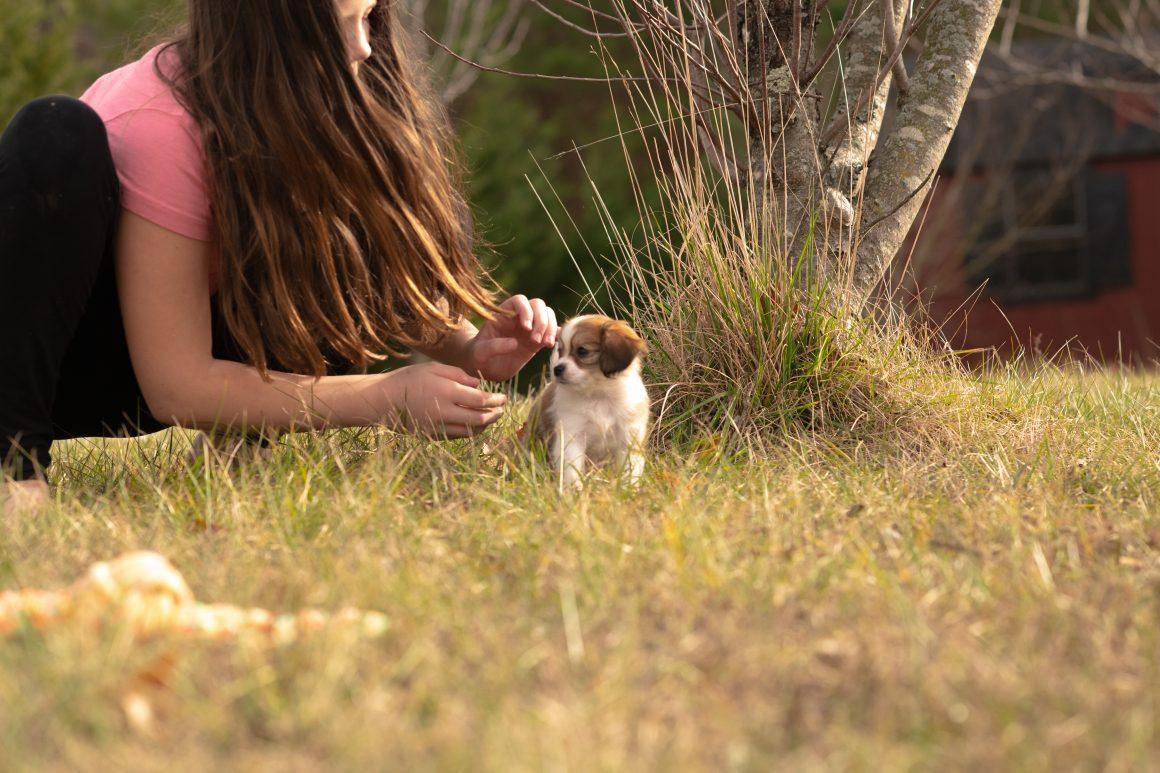 Marshmallow – Baby Girl Cavapom